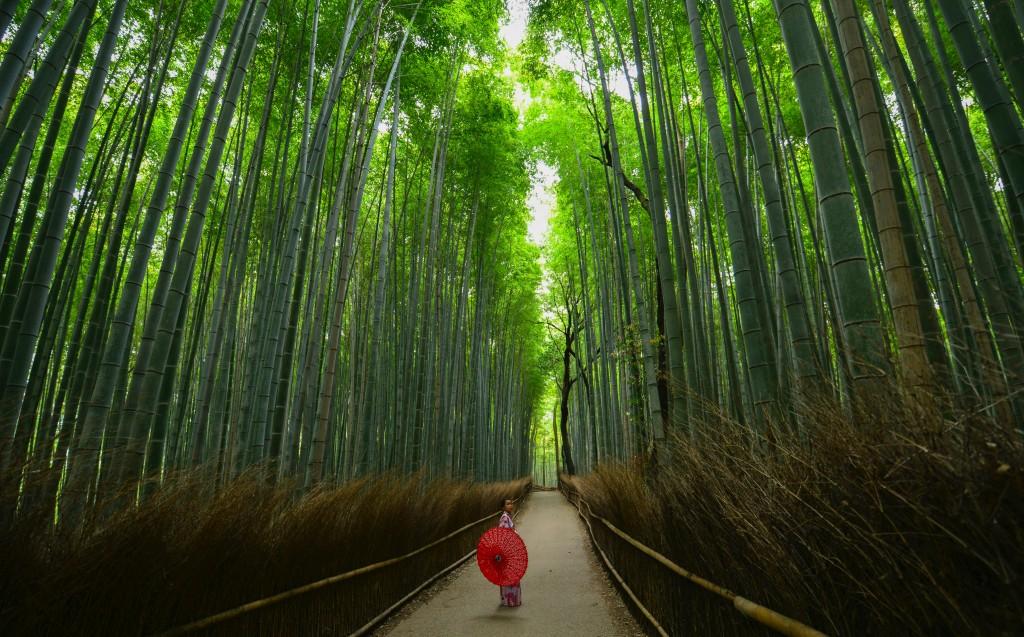 kyoto foresta bambu